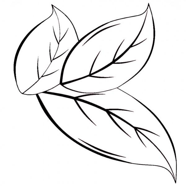 biala farbka 1