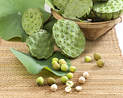 bambus i zieleń